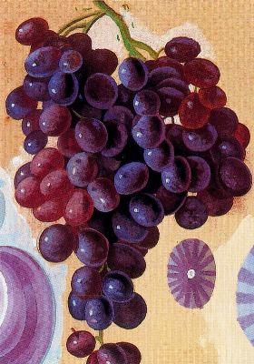 Racimo de uvas y conchas, de Maruja Mallo