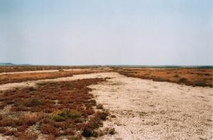 Marisma de Las Aletas (Puerto Real)
